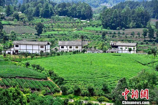 张明先生一家人慕名自驾来到贵州省遵义市湄潭县翠芽27°景区旅游