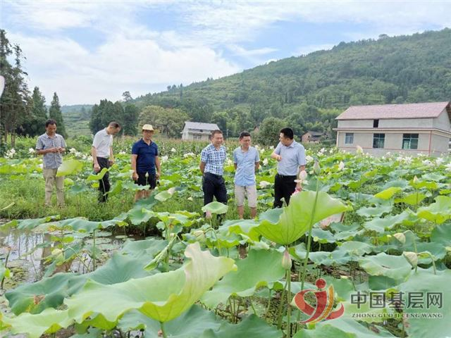 新化县油溪乡产业扶贫开花了