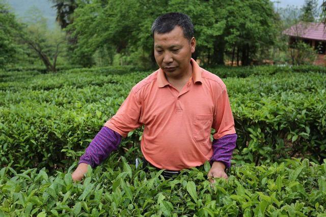 城步一鸣生态观光农业园里油茶水果香